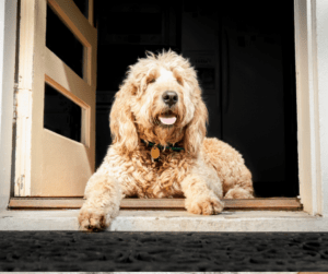 dog in the doorway