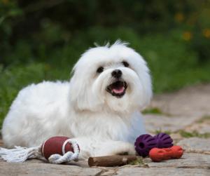 dog and dog toys