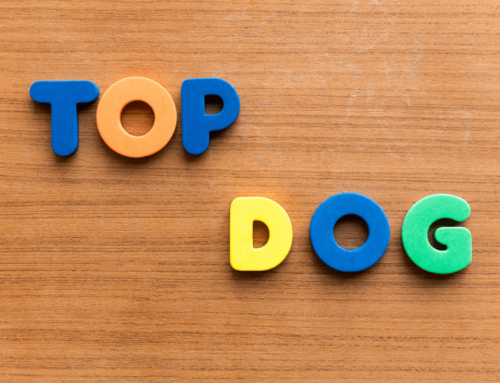 The Dog Training 10 Commandments