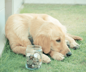 dog with coins