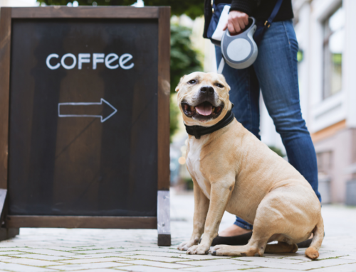 Coffee and My Dog: Best Part of Your Day