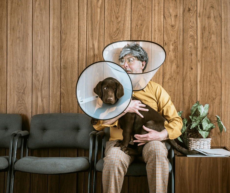dog and human wearing cones