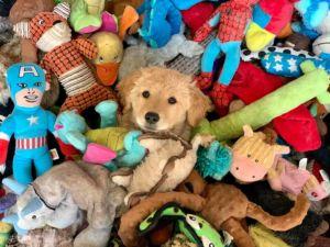 puppy and stuffed animals