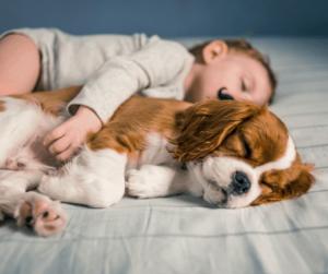 dog and baby sleeping