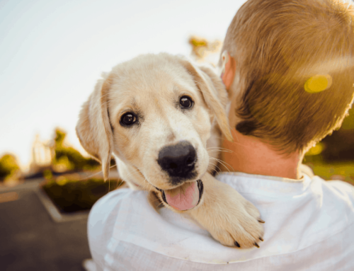 Puppy 101-Your Starter Guide