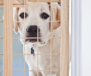 puppy behind gate