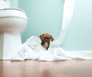 puppy and toilet paper