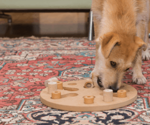 dog solving puzzle