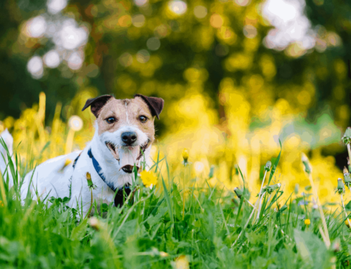 Achoo, Your Guide To Dog Allergies