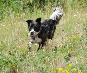 dog in dry grass
