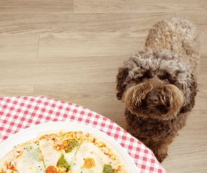 dog and pizza