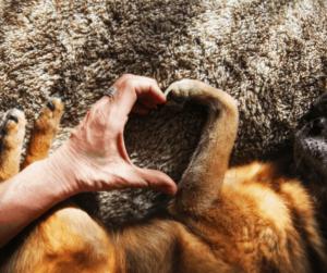 dog paw an human hand