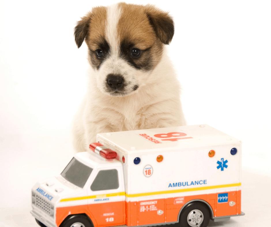 dog emergency