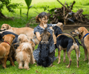 dogs and person doggie daycare