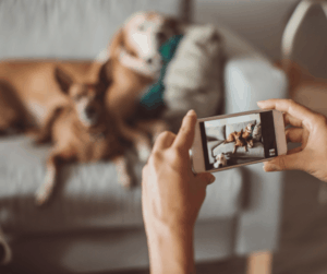 dogs taking a photo