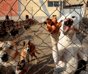 dogs at the shelter